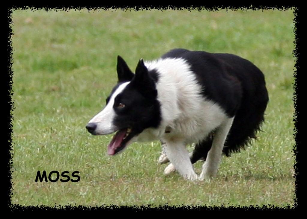 Mosspress