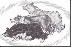 ABCdog2